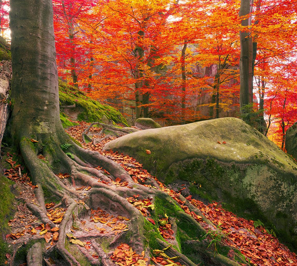Радостные моменты предвещает, согласно соннику, сон, в котором явился красивый и зеленый лес.