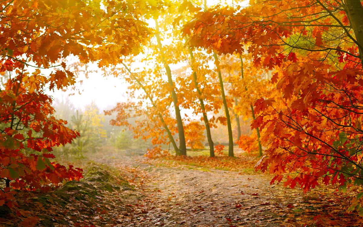 Картинки про осень из
