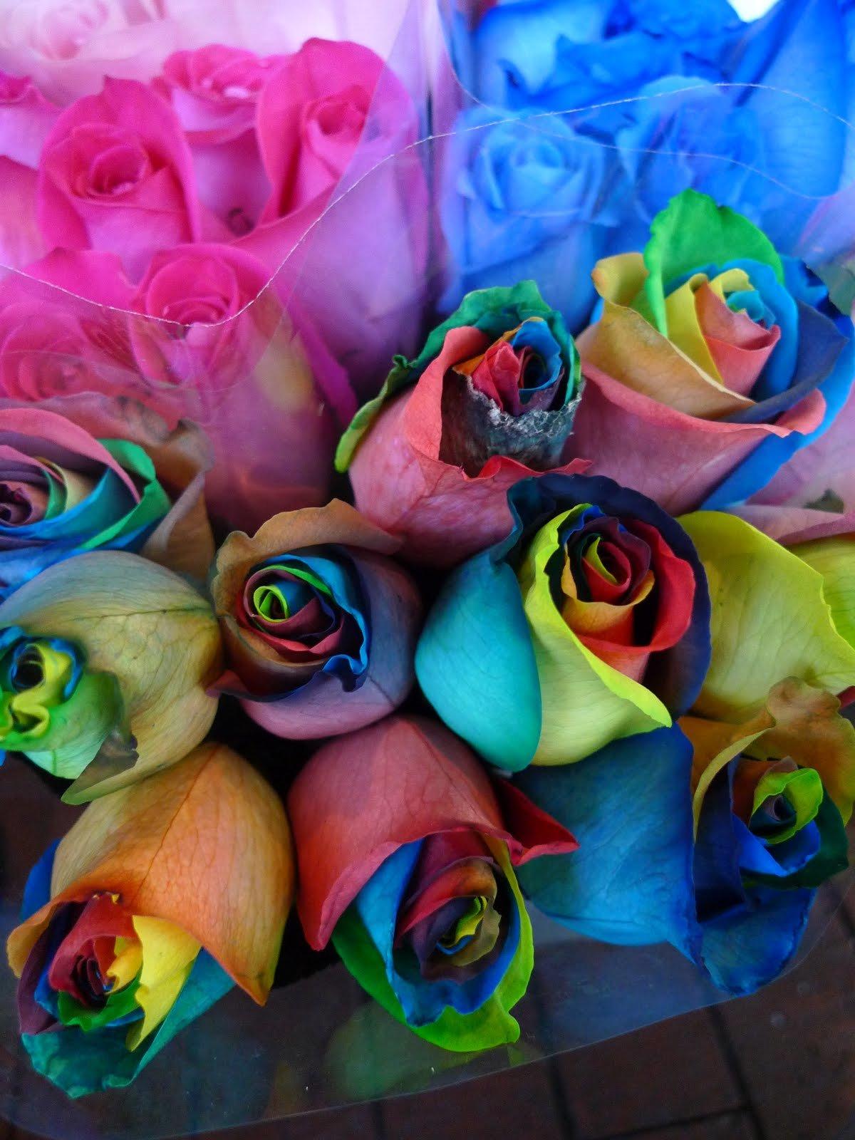 Фотография цветная роза