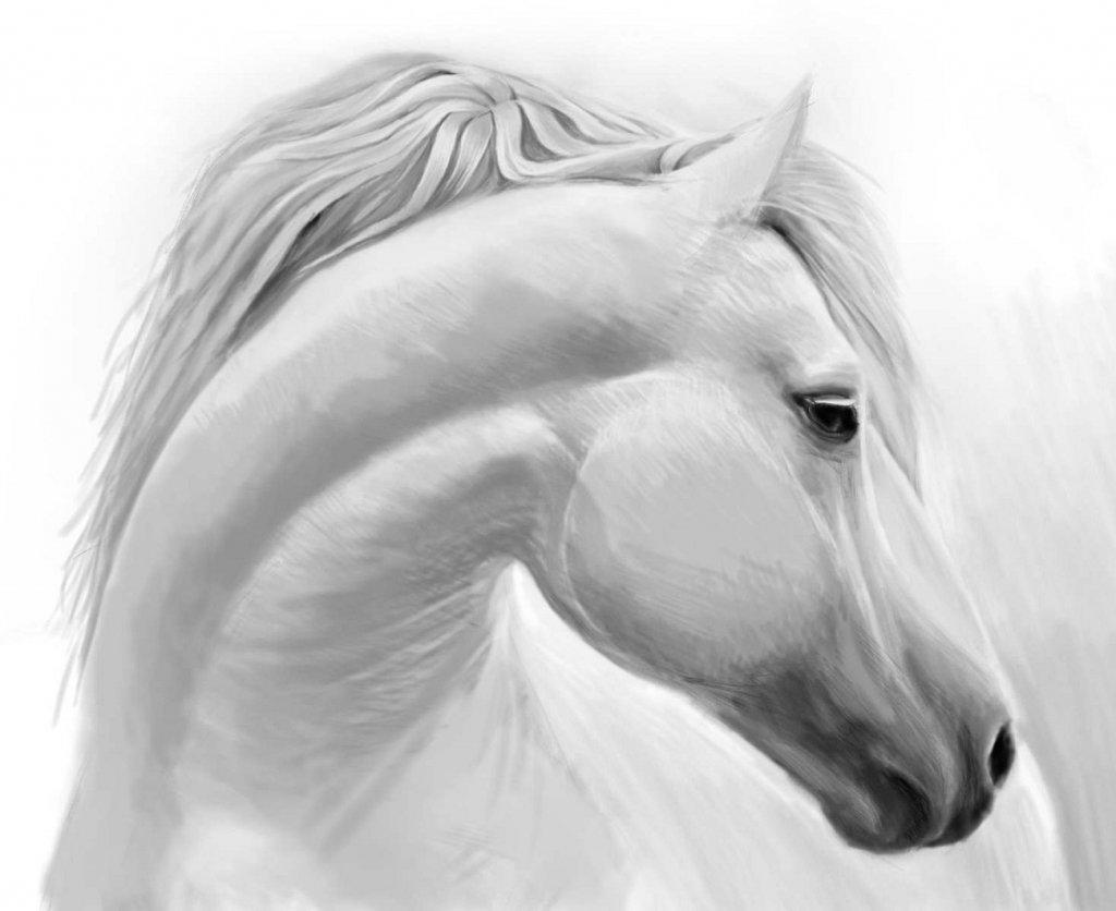 Картинка лошади карандашом