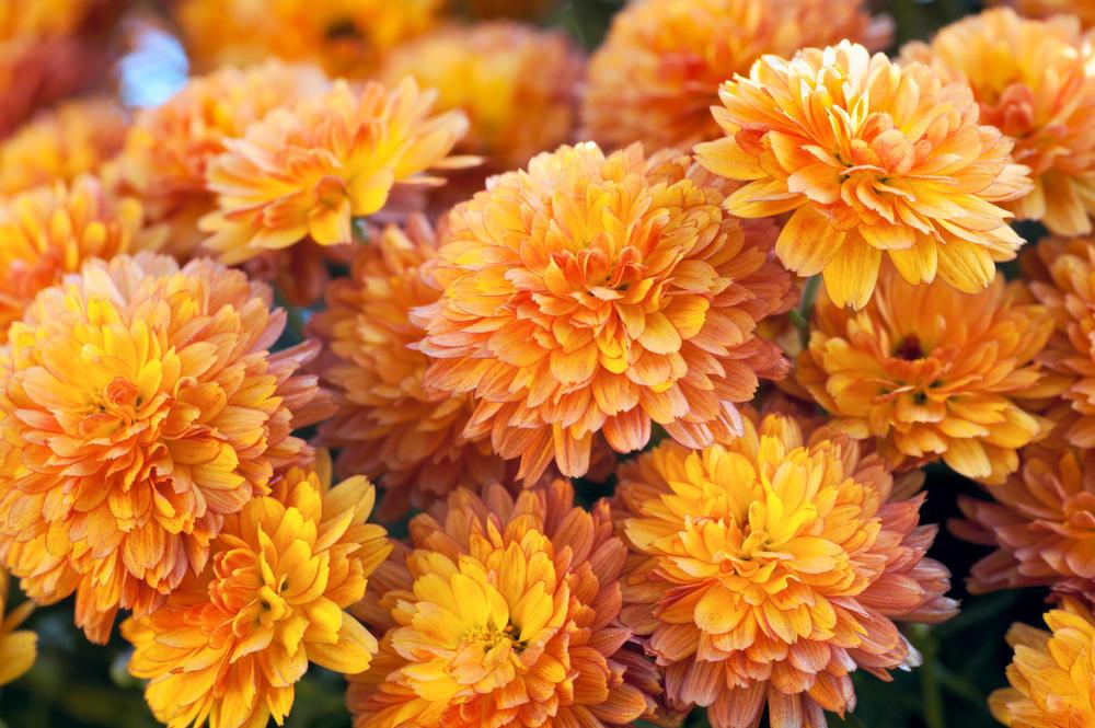 взял основу фотографии осенних цветов низких частот