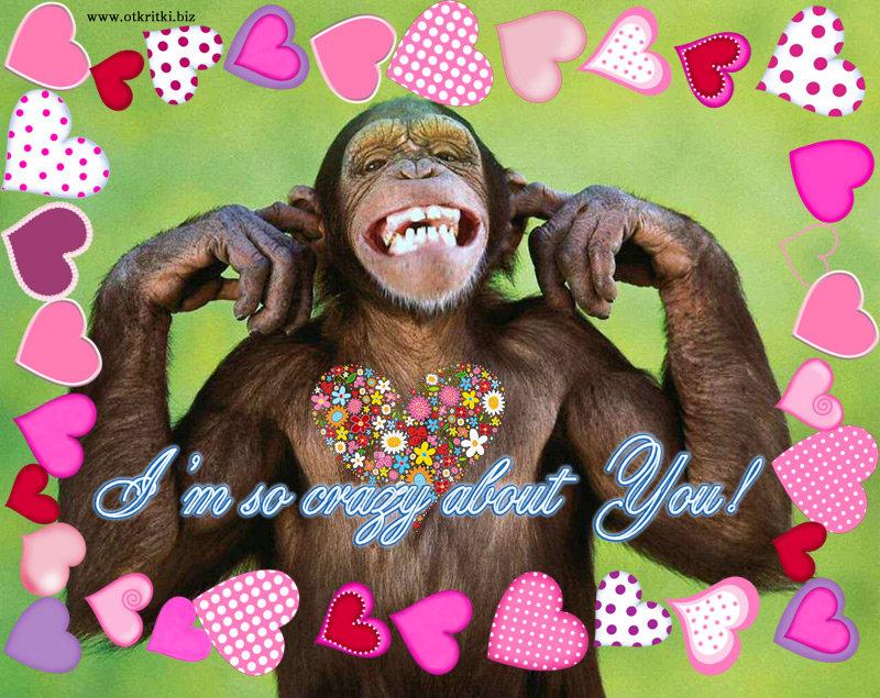 Картинки с днем рождения прикольные с обезьянами