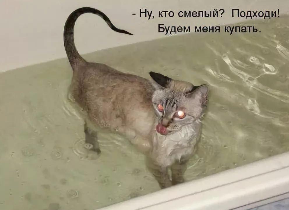 Картинки приколы кошки с надписями, обои картинки
