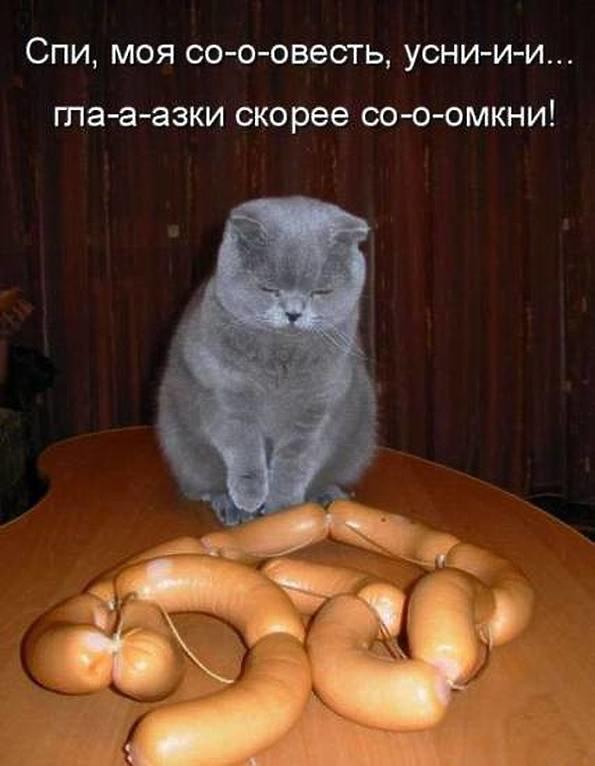 Яндекс, прикольные картинка кошек с надписями