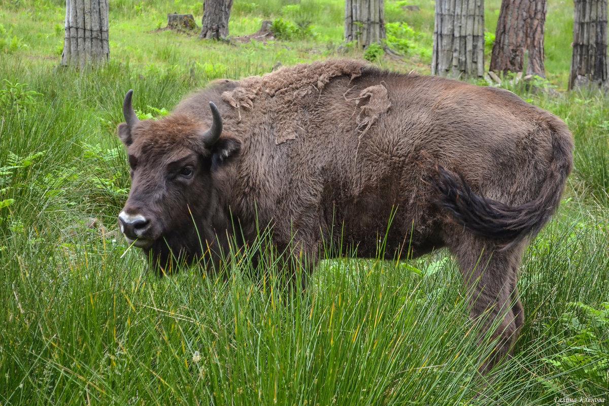 картинка животных в белоруссии статья этой стране