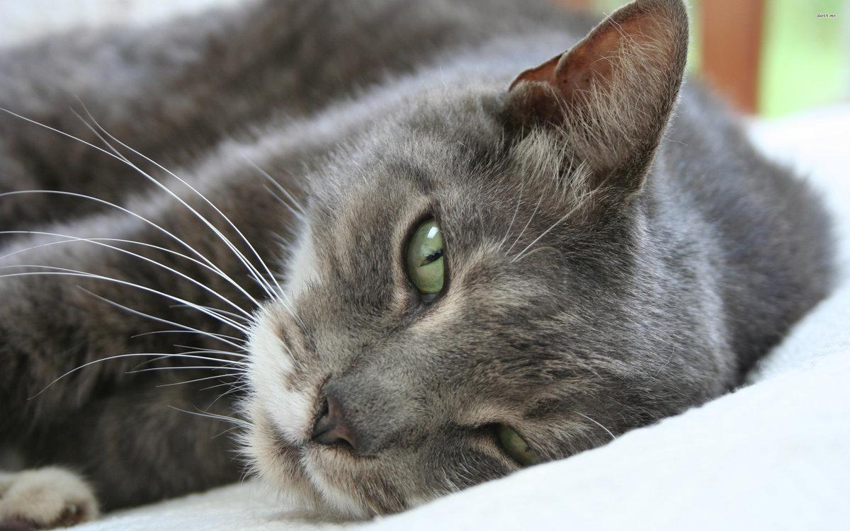 Код открытка, картинки кошек картинки