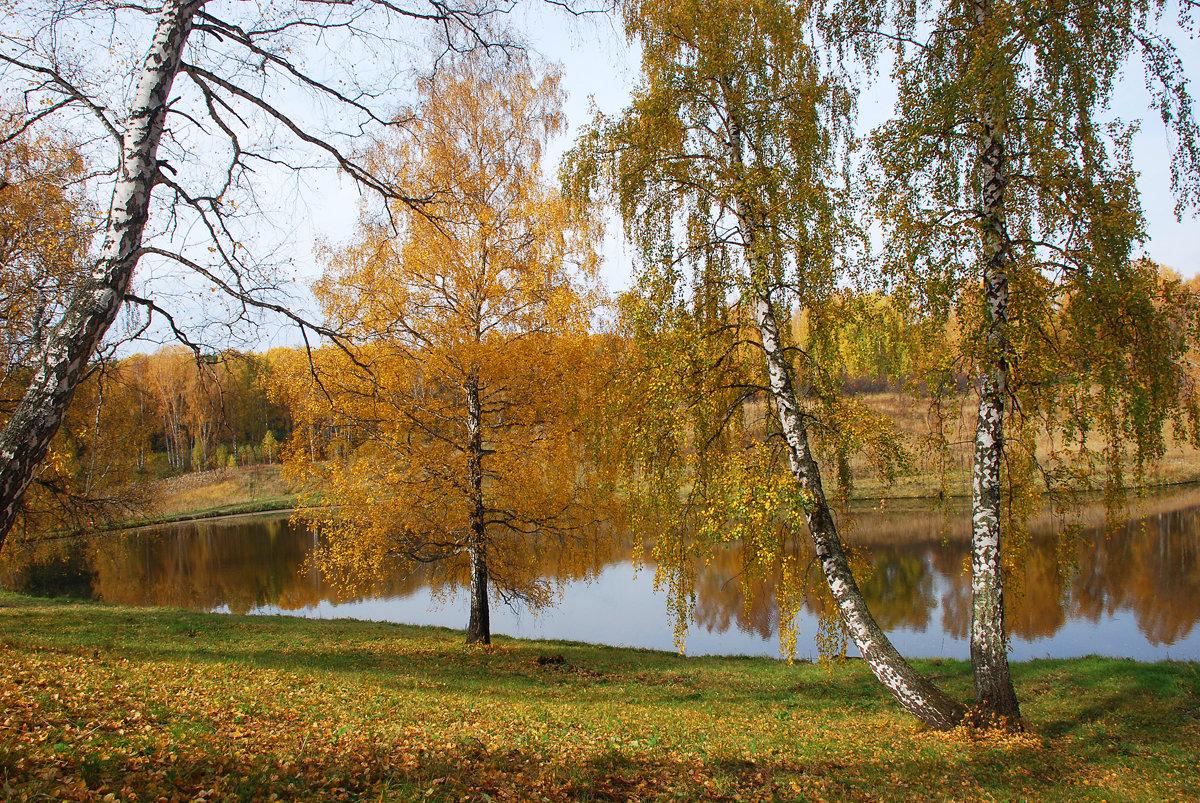 Береза картинки весна лето осень