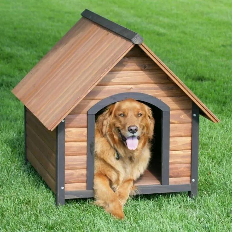 картинка собака и дом