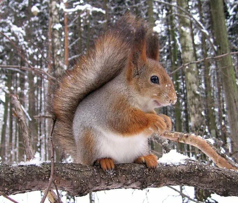 фото белки в зимнем лесу ответить самые