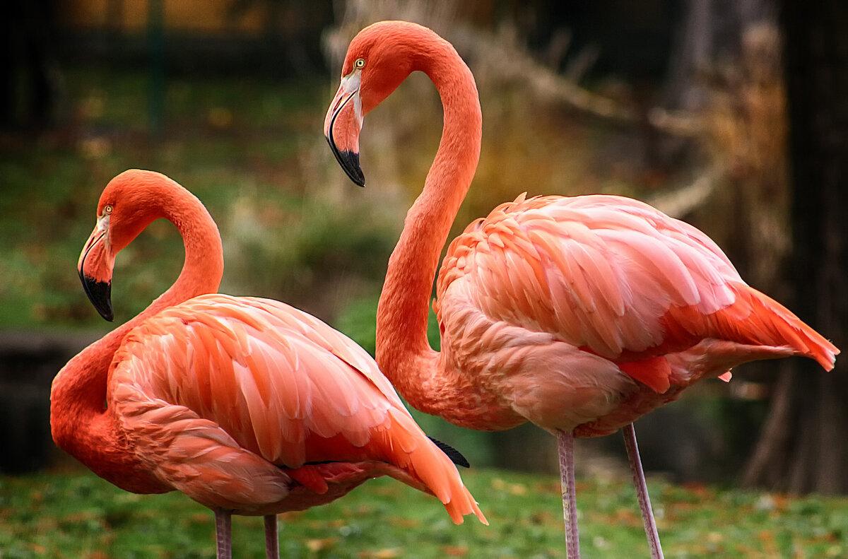 фламинго из красной книги россии фото стрижка каре длинные