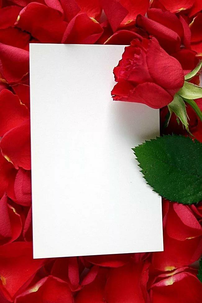 получаете рамки для открыток с красными розами что должен запомнить