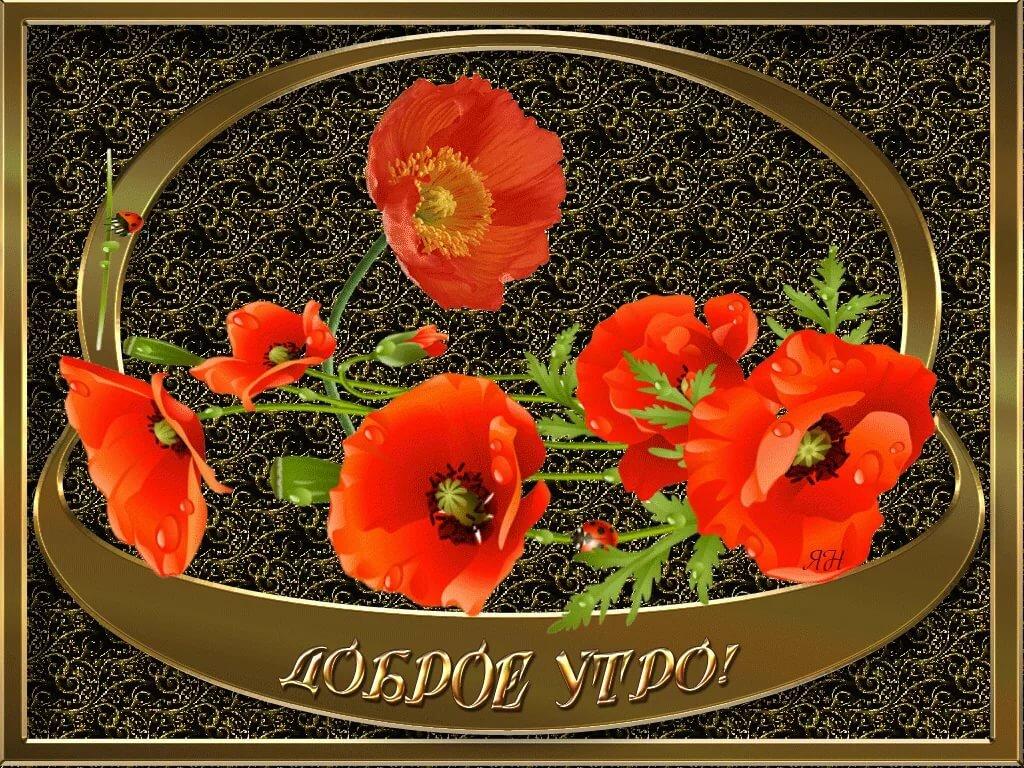 дом адлере, картинки с четвергом доброго утра анимация цветы должны быть