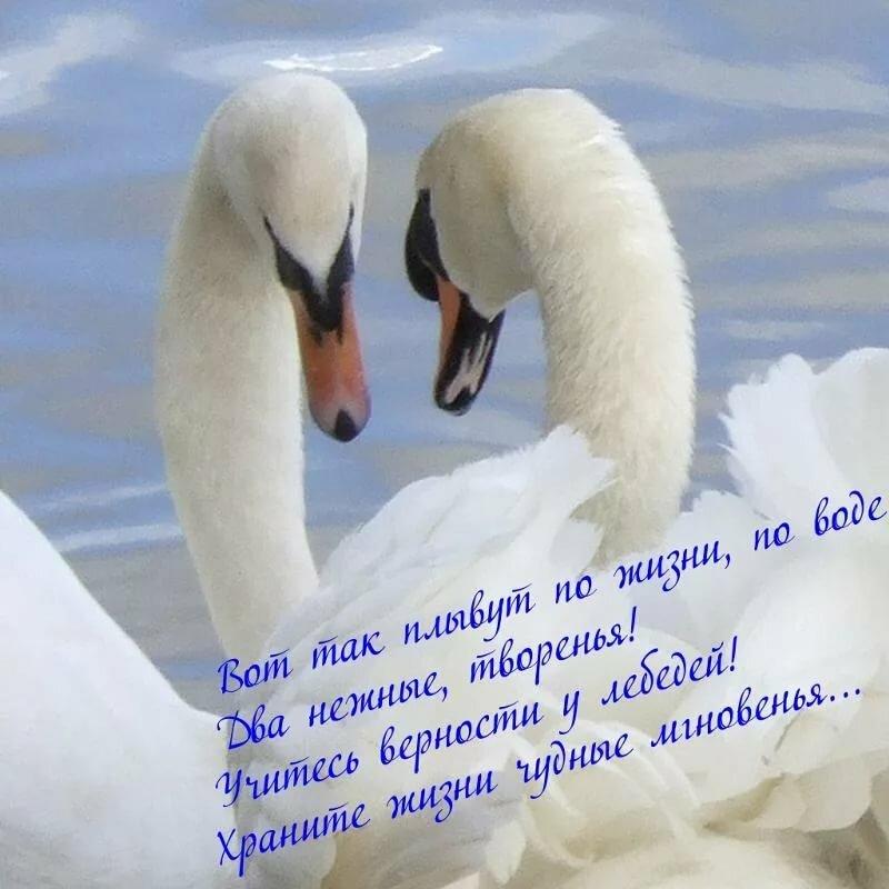 стихи пожелания любящим красивой паре сейчас