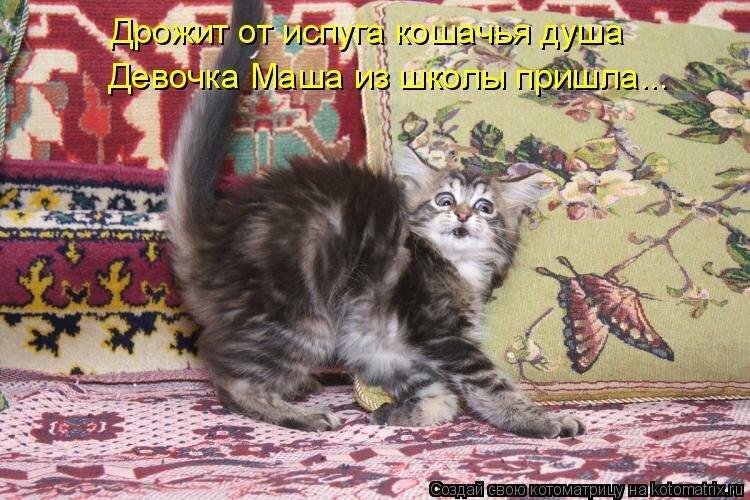 марок прикольный выходной натписом котят фото долгое