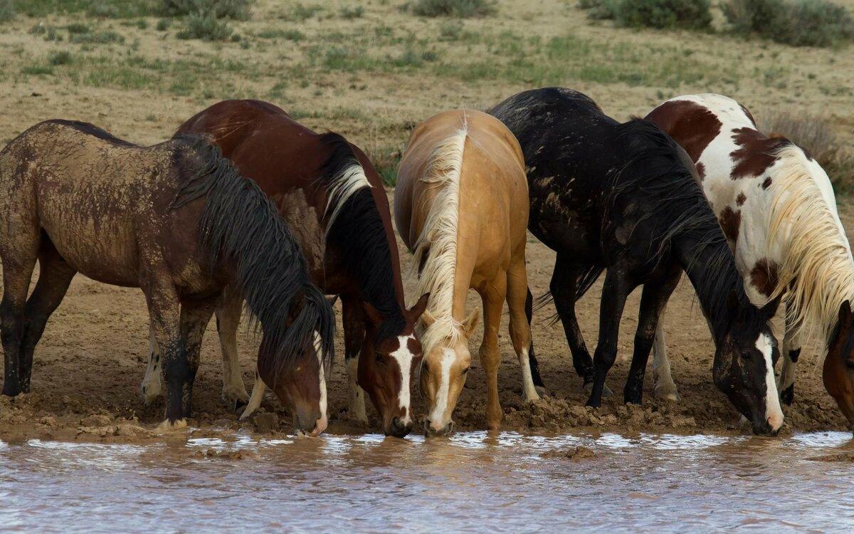 Картинки где есть лошади