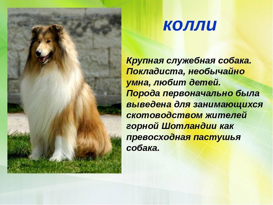 характеристика собак и картинки около белизна печенья