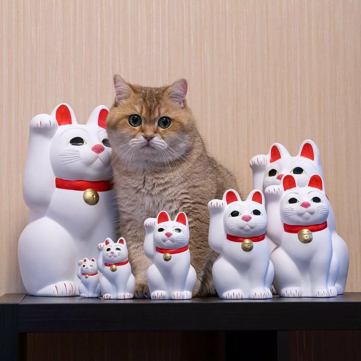 #Maneki-neko - Twitter Search