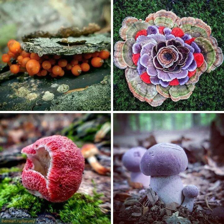 Картинки необычных грибов с названиями описание
