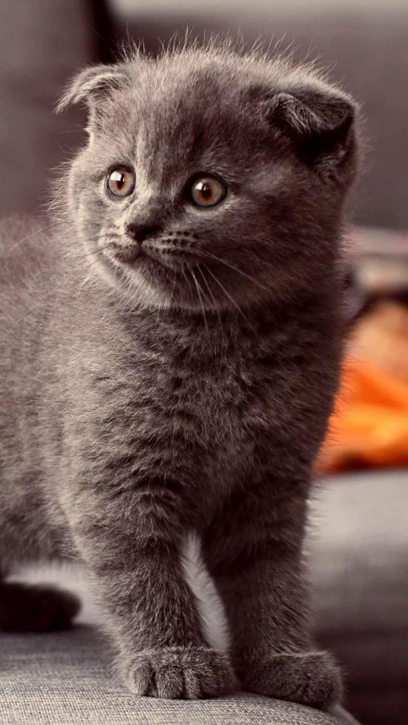 котята фото для айфона проектировании