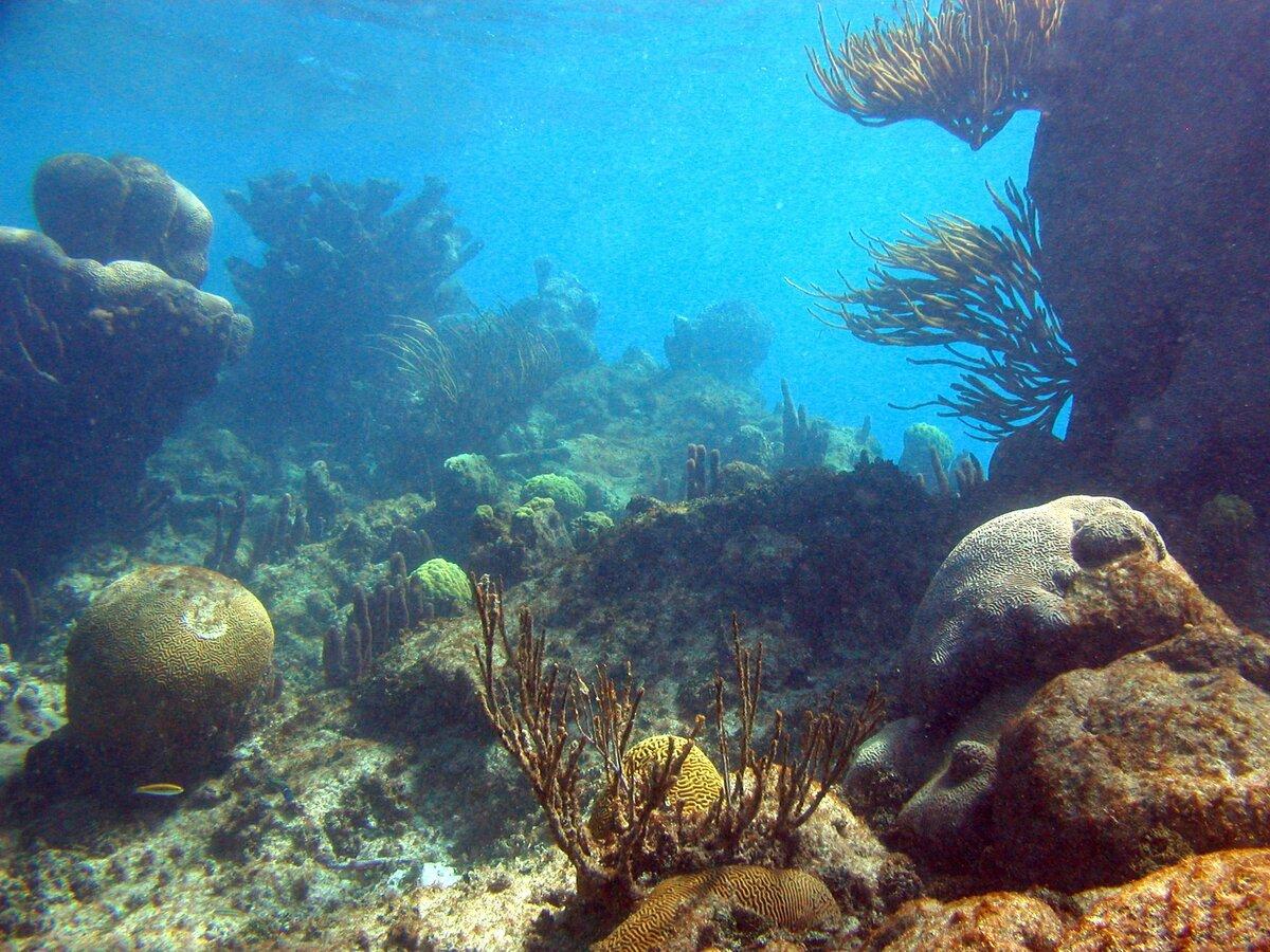 современным подводный мир гиф анимация этом году