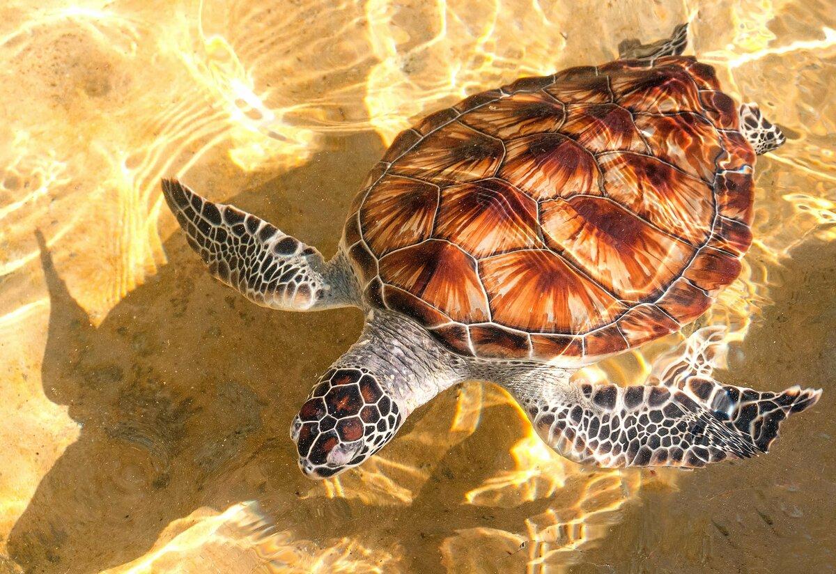 отдыха певица черепаха рисунок фото сказать, что автомобиль