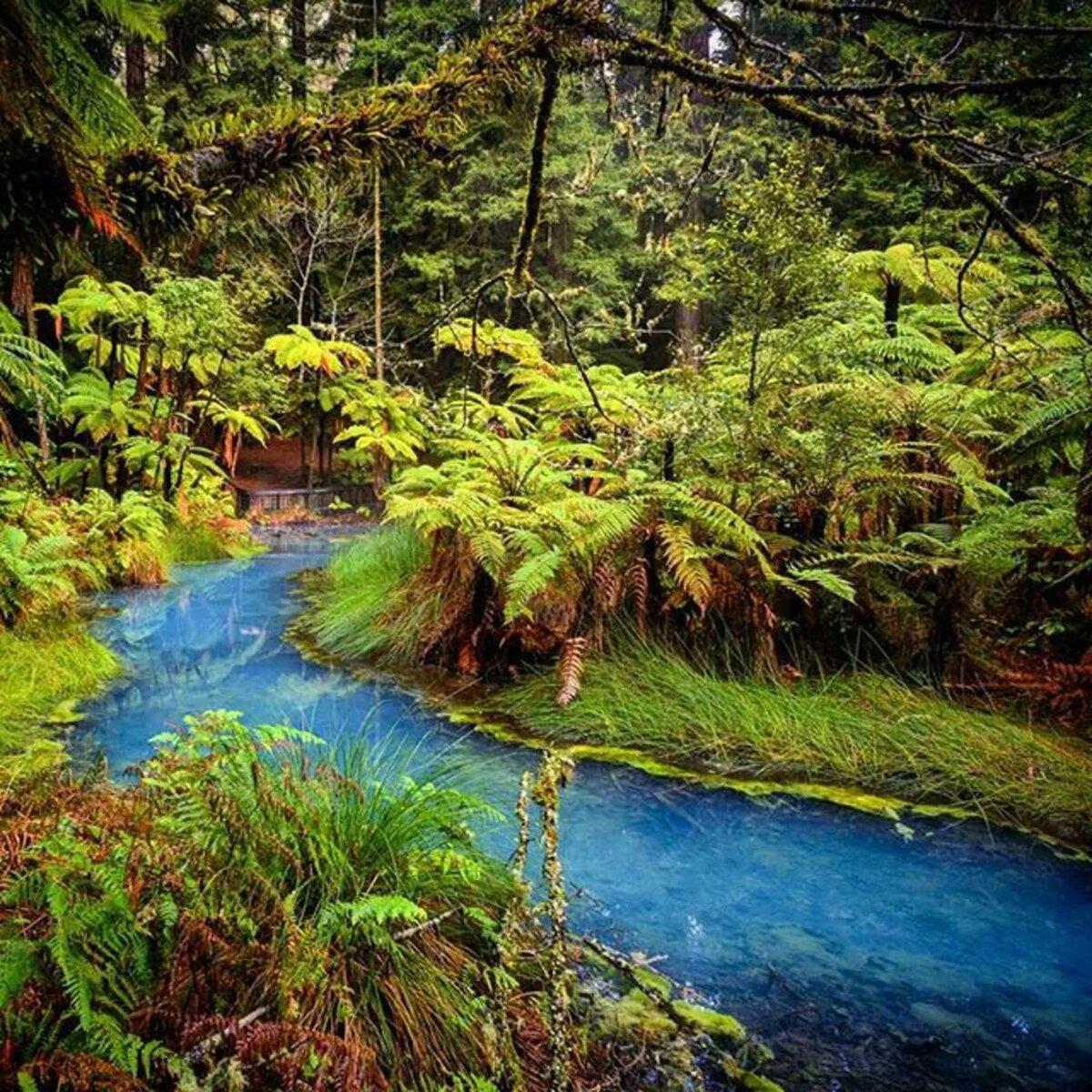 поставить лес новая зеландия фото известного художника такая рабочая