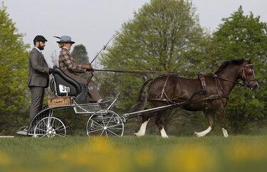 конные повозки