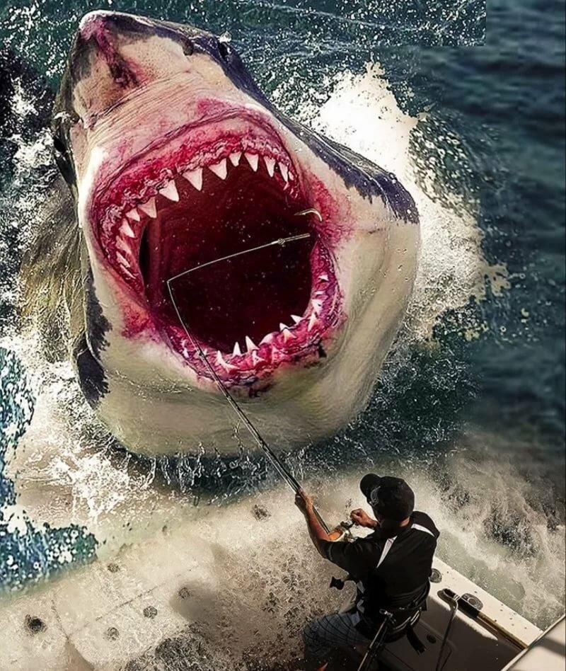 В пасти акулы картинки
