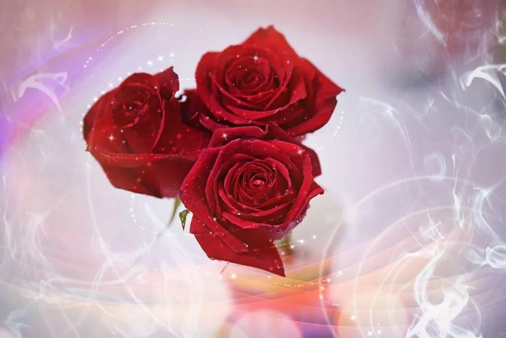 Большие поздравительные открытки с розами