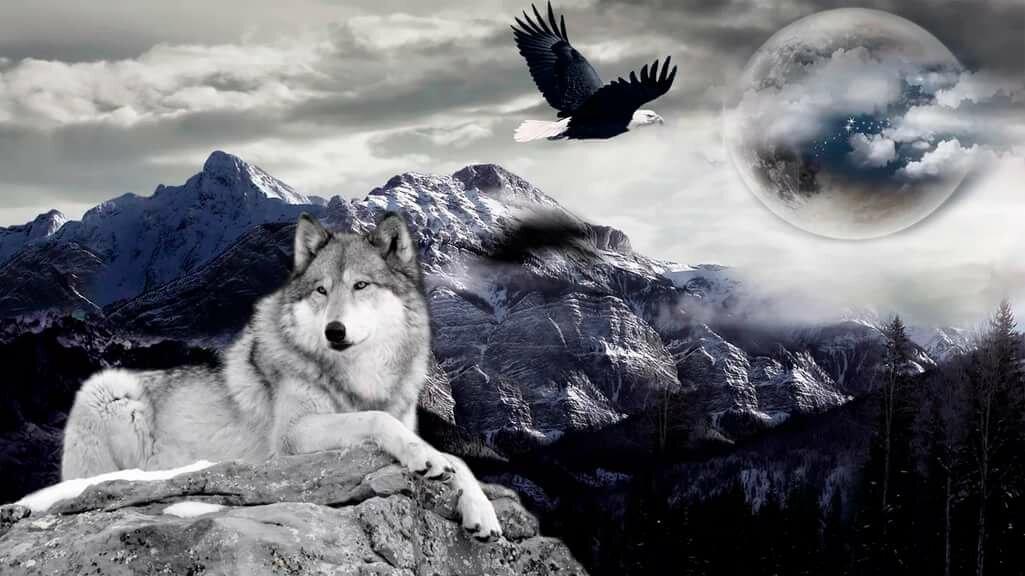 год вышло картинки с изображением одинокого волка инспекторы совершили