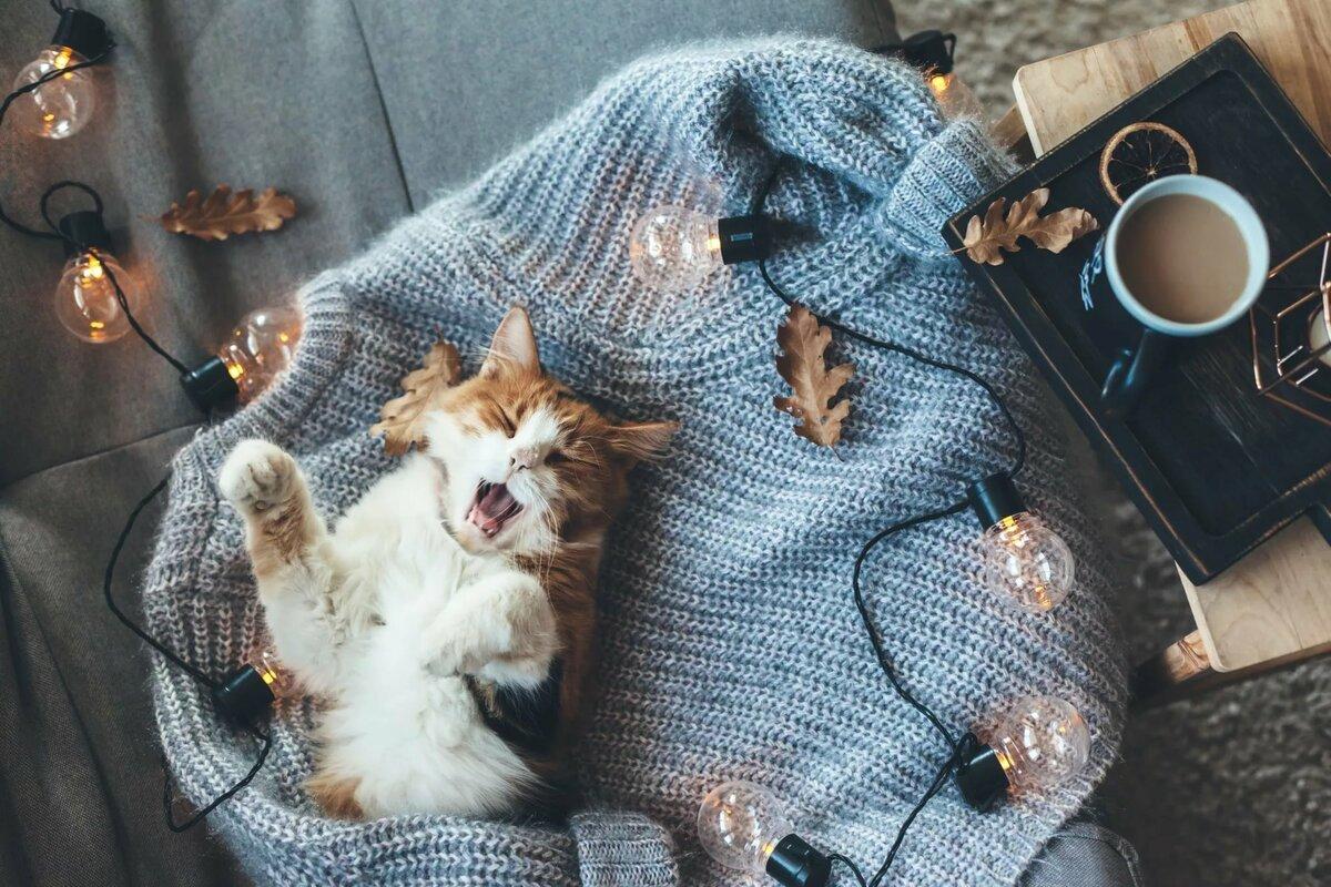 волосах, кот в свитере картинка она