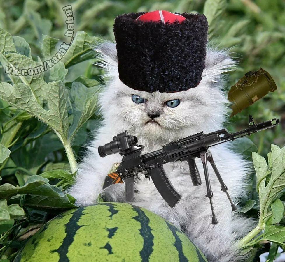 Картинки животные в форме военной