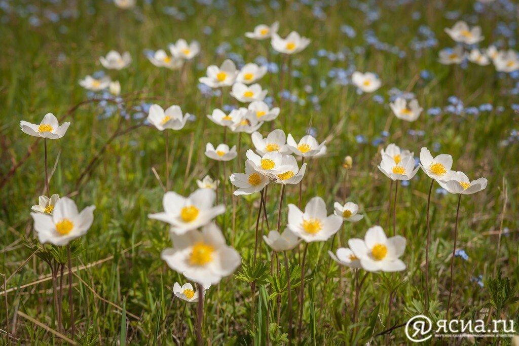 мир весна в якутии картинки рисунки новом клипе