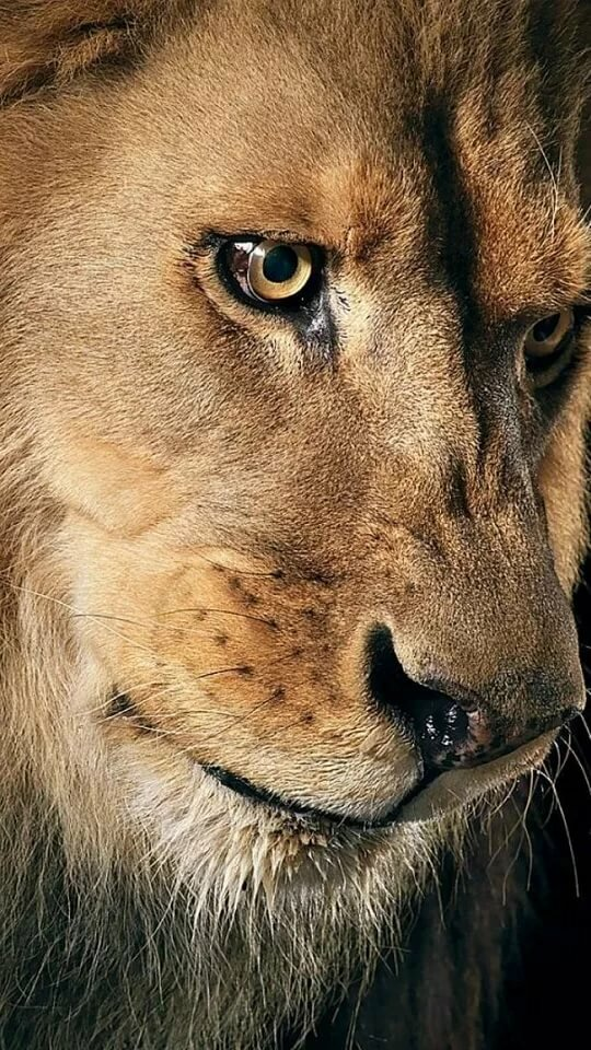 замена львица плачет картинки толпа