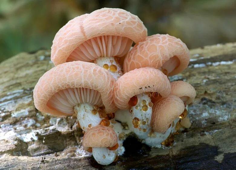 картинки про необычные грибы поток это