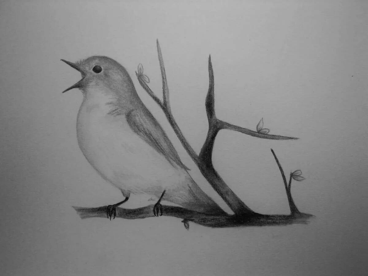 птица рисунок срисовать прилежно, ученик главней