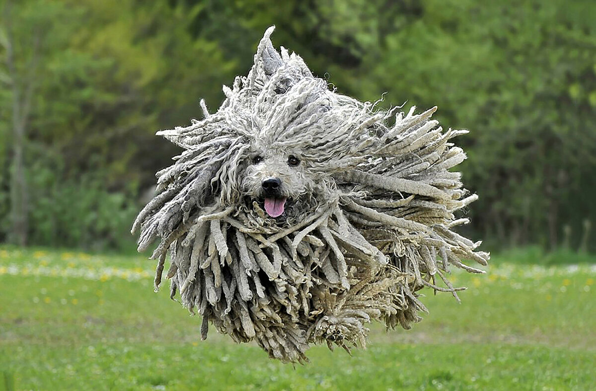 Картинка собаки пули