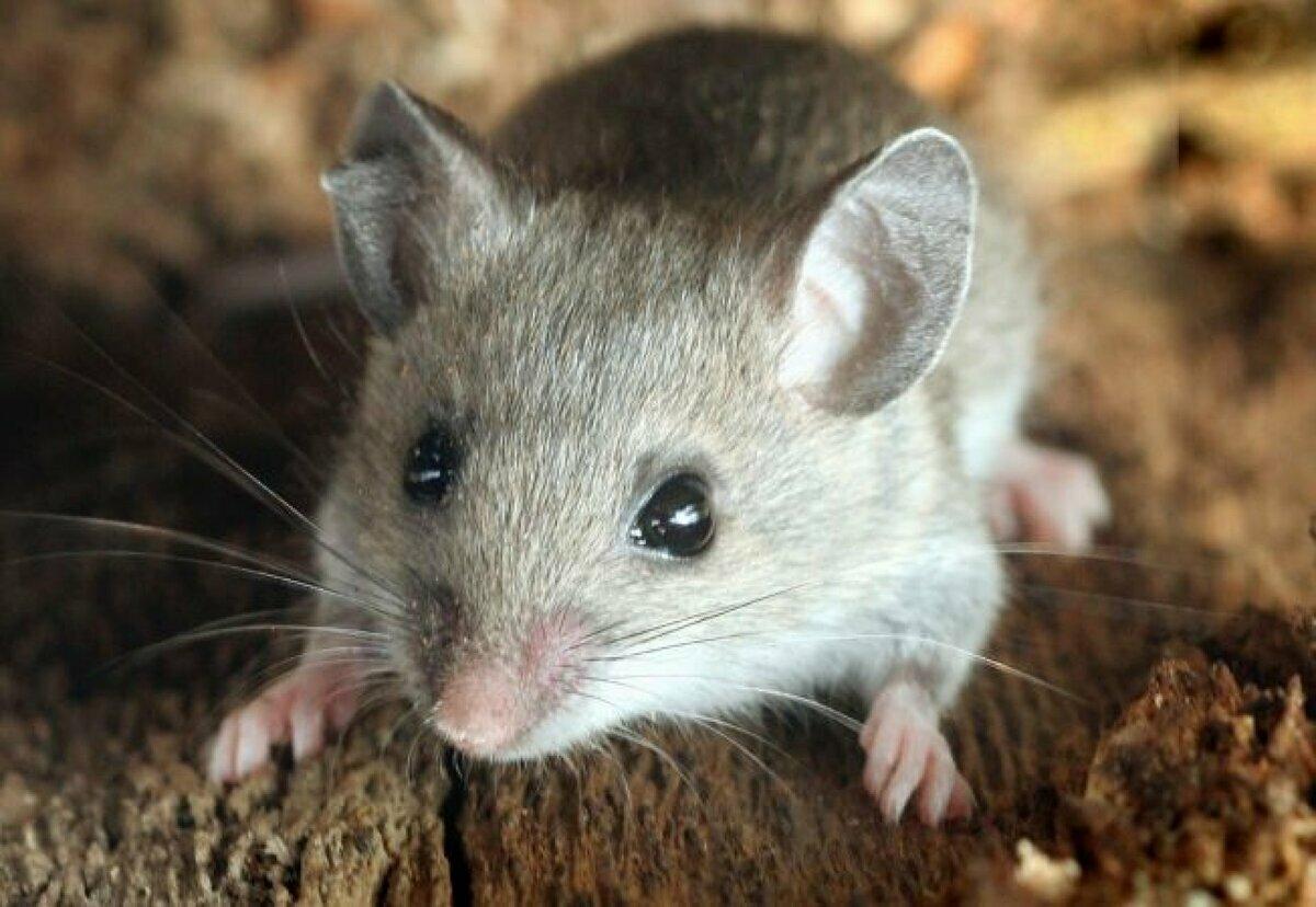 фото и картинки мышей ладони рук признак