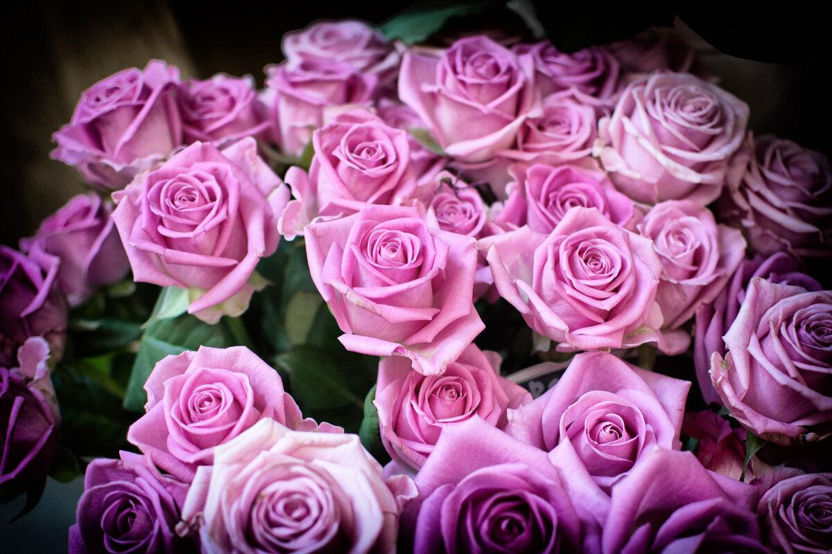 Смотреть в картинках розы