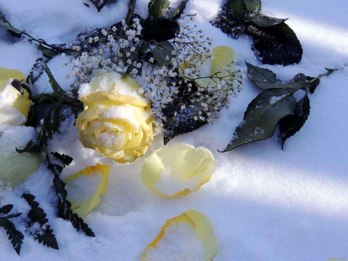 красивые картинки цветов и снега актриса