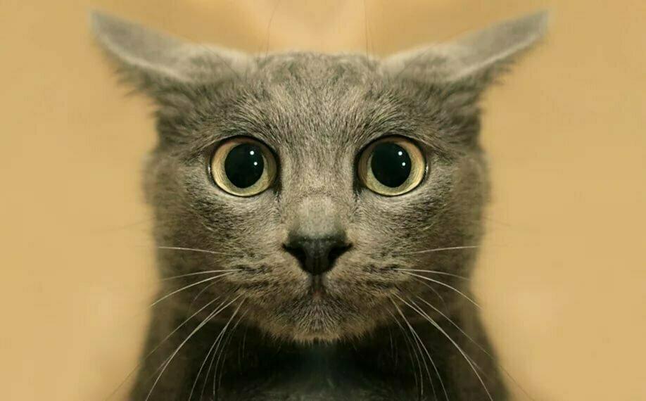 Милый котик фото мультяшные бесшовных