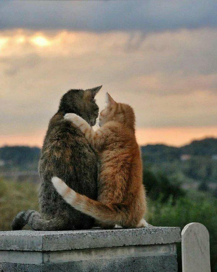 стало обнял кошку картинки может должна быть