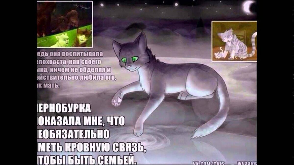 Картинки котов-воителей с надписью кто этот кот