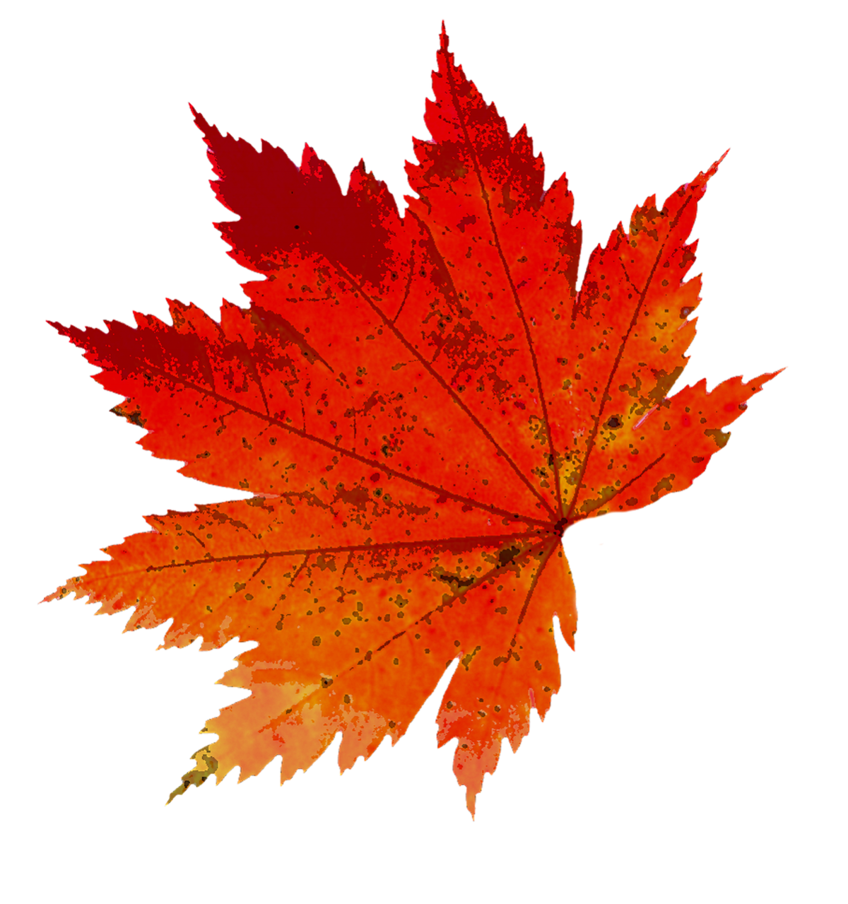 Листок осень картинка