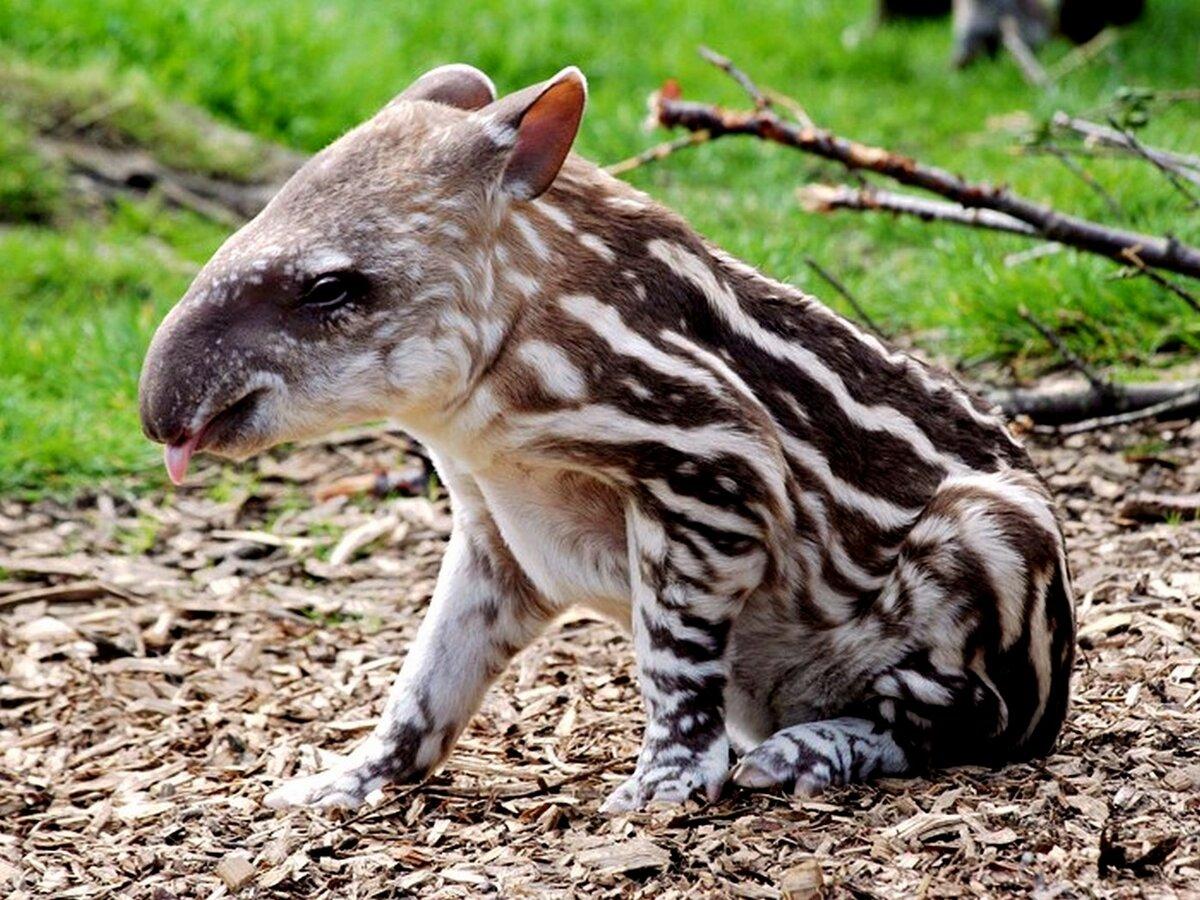 исключает возможность самые необычные животные мира фото и названия они