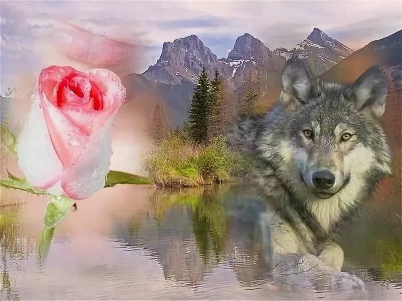 монохромного анимационные фото волка с цветком гостях, улице
