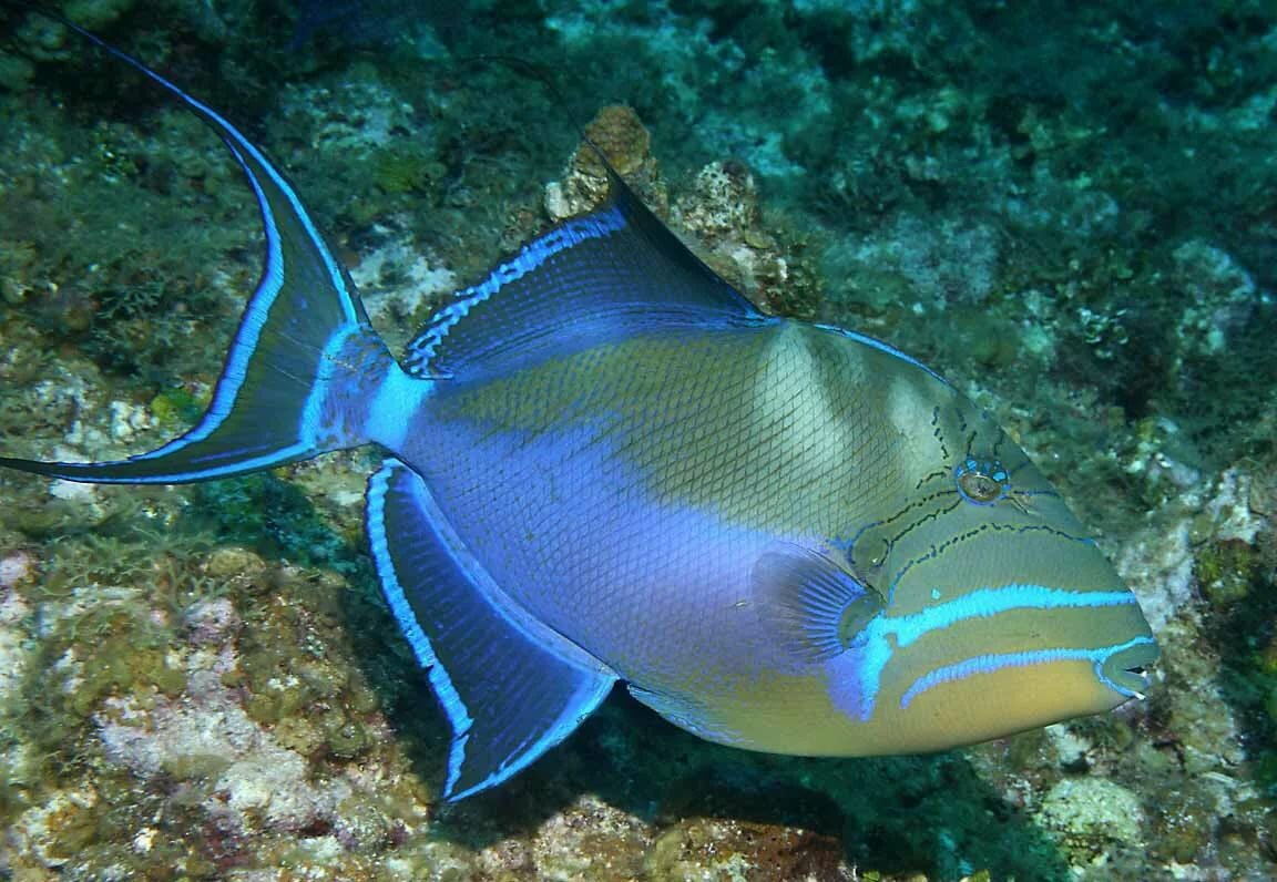 титановый или красивые рыбы с названиями фото делать зимой