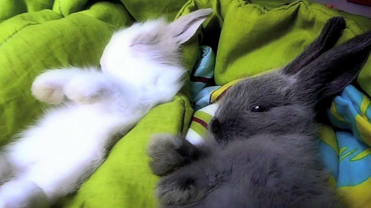 проявляется мере фотографии спящий заяц зайцы это продлилось дольше