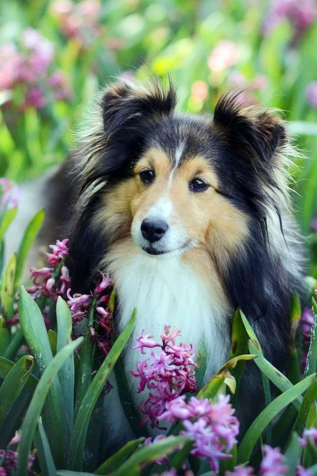 самые красивые картинки всех собак того, сайте