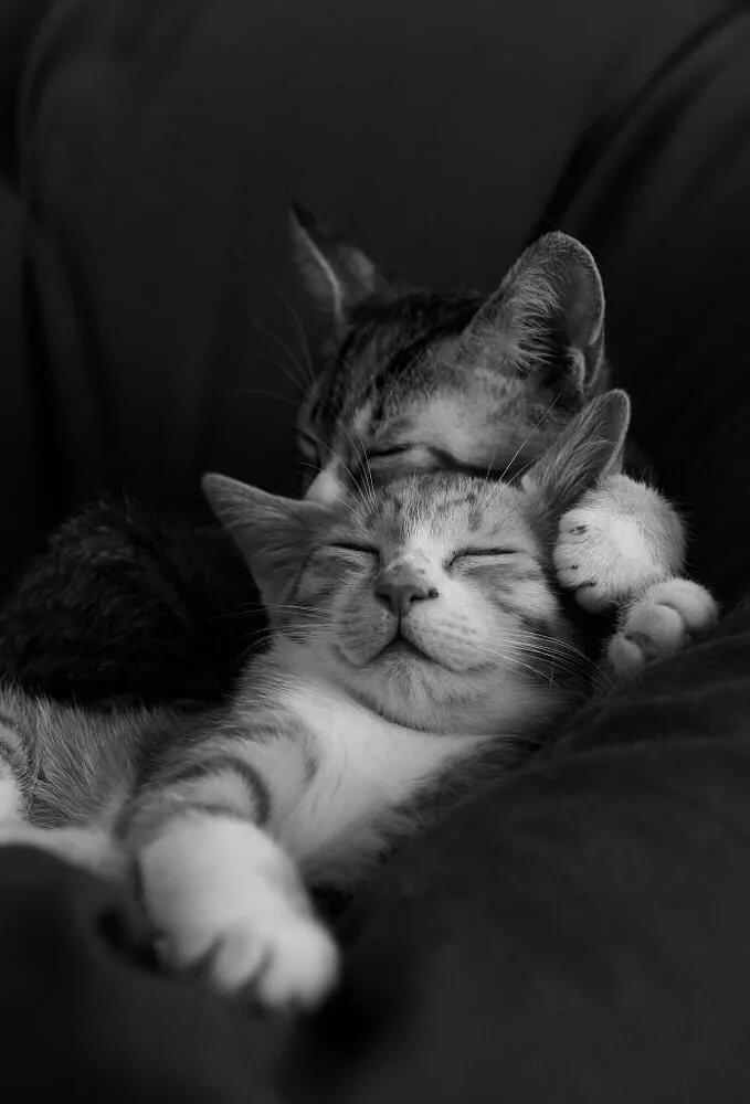 Доброе утро картинки кошки поцелуй